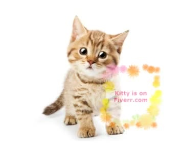 be Kitty, the cat, your Animal Spokesperson