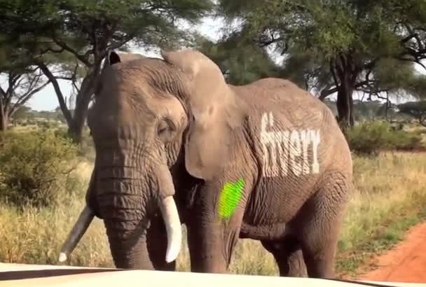 get your text or logo printed on a Elephant