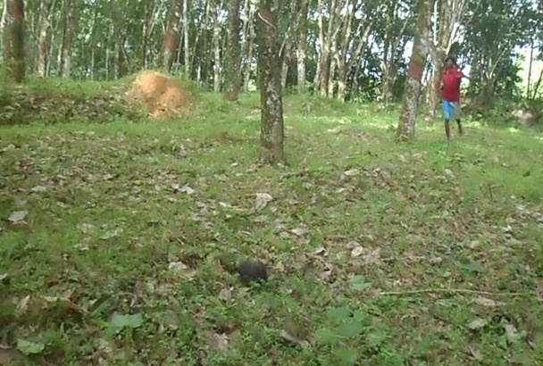find your  any message in Sri Lankan rubber estate