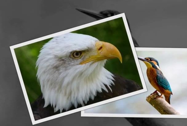 provide you 200 photo FULLY Royalty free, Commercial Use