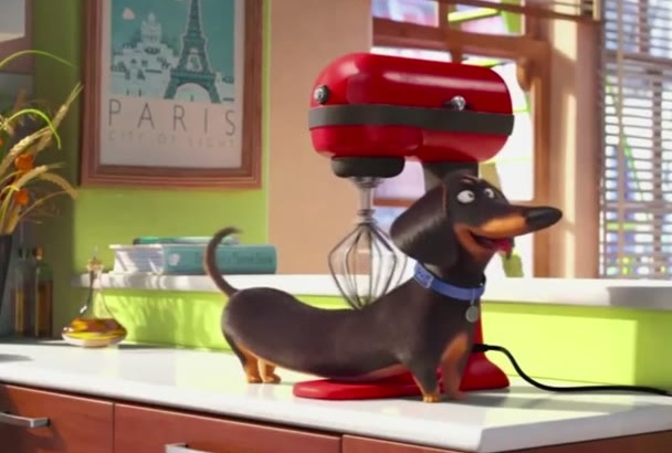 put your text and logo in this funny wiener dog video