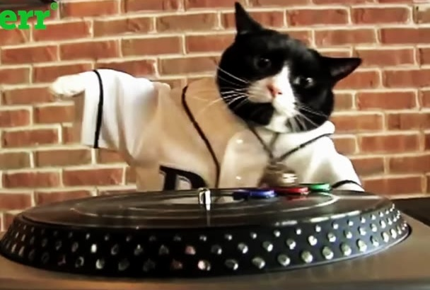 mi gato DJ para ti