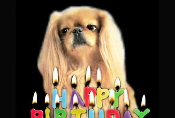 make a Happy Birthday dog or cat singing video
