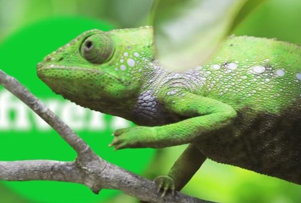 make Funny Chameleon video