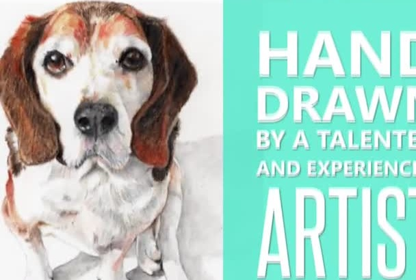 hand draw a portrait of your animal, pet