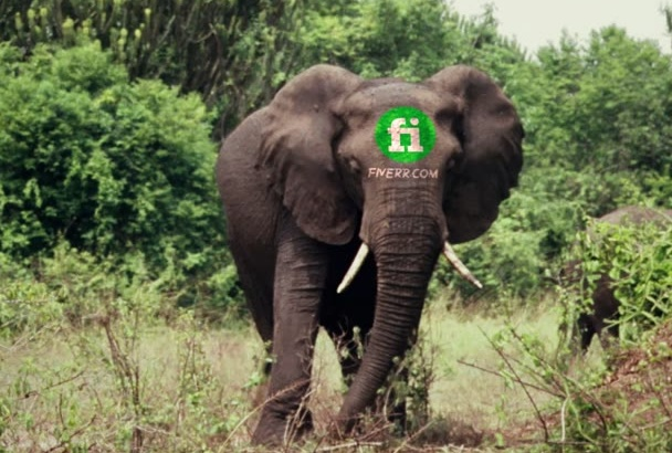 place your logo or message on an Elephant Head