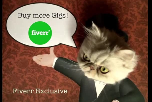 make a cute cat pet video with company logo