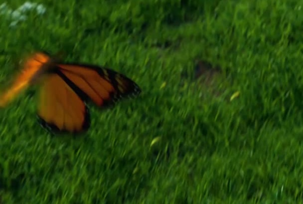 create this butterfly video intro
