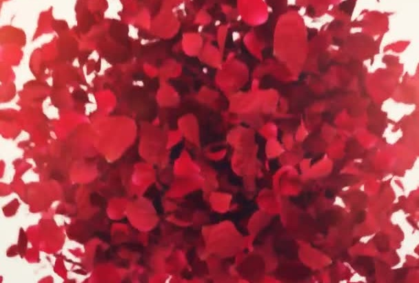 create a Beautiful Rose Petals Logo Reveal Video