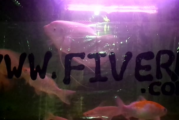 write your message on my very BEAUTIFUL fish tank