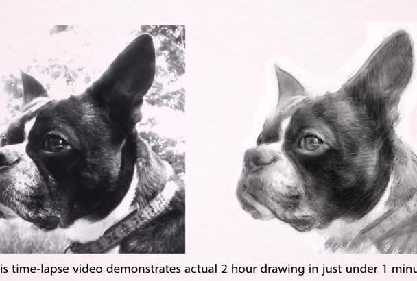 sketch a Pencil Portrait of your Pet