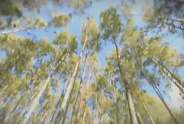 do a Promotional Forest Video