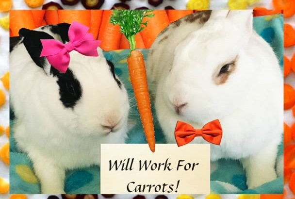 be your bunny business booster