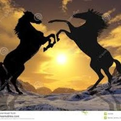 stallions223
