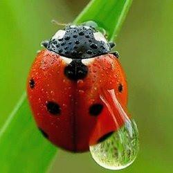 ladybugbusy