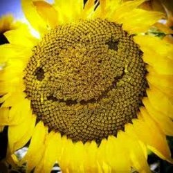 sunfloweritaly