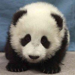 panda_ilustory
