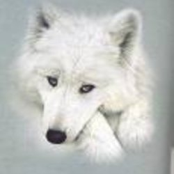 wolfachex