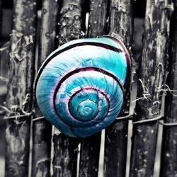 snailmailcool