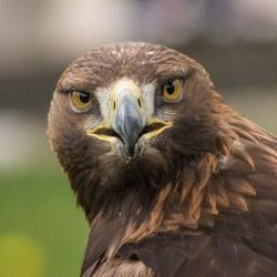 eagle_tech19