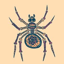 spiderhacker