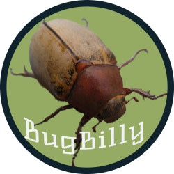 bugbilly