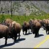 buffalo_storm