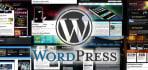 send you any premium wordpress theme