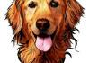 make a cartoon head of your dog
