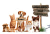 do design for pets advertising