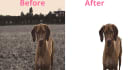 remove Background 15 images professionally  within 24 hours